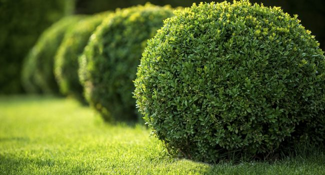 Landscaping bushes at Tony Monaco Landscaping